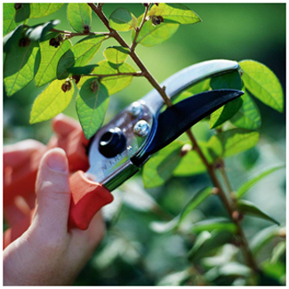 Specialist Pruning